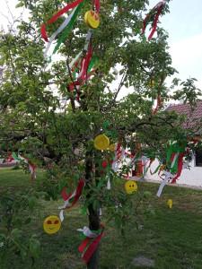 Suri család fája
